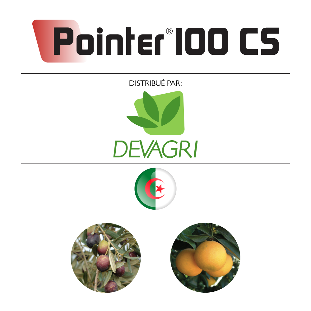 Pointer 100 CS