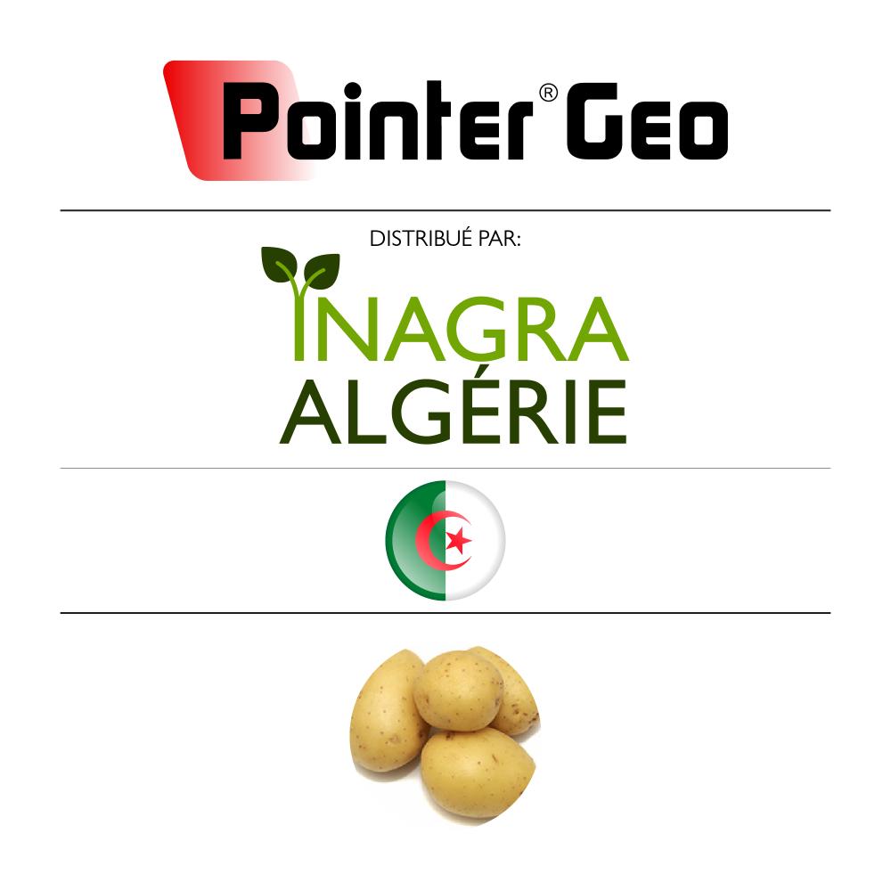 Pointer Geo