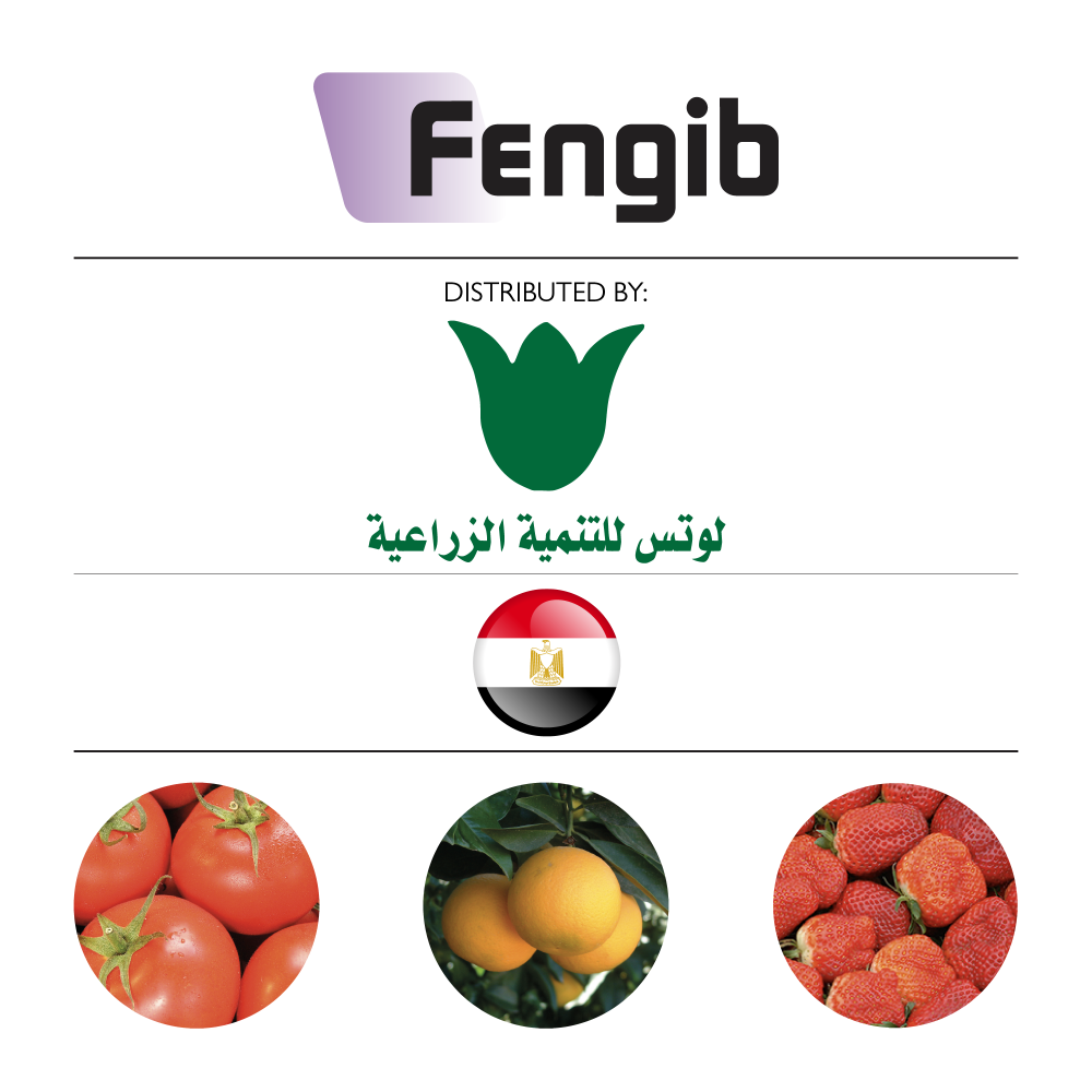 Fengib