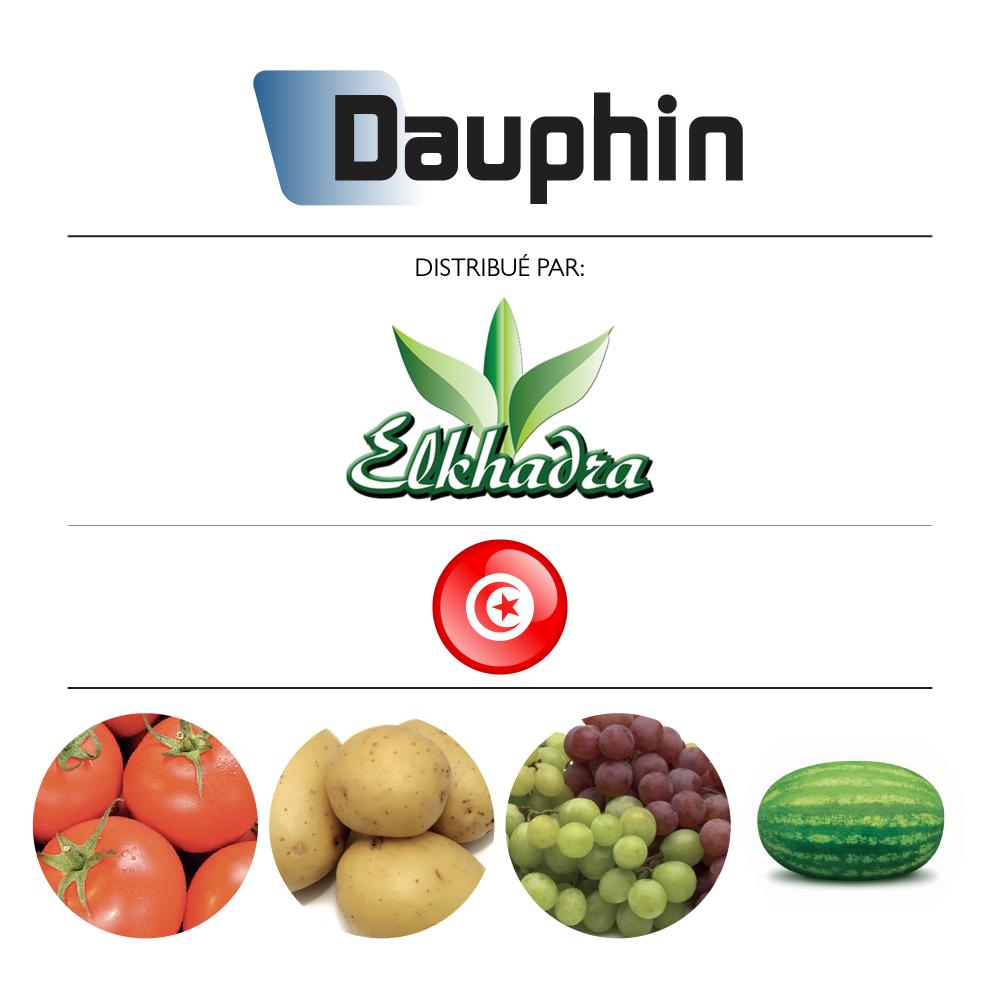 Dauphin 80