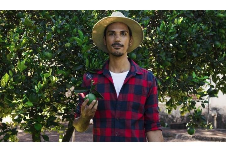 Sipcam o cómo cuidar los cultivos de cítricos o uva